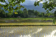 Where to stay in Pai