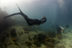 Free diving on Ko Tao