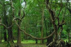 Treetop walk at Thung Khai Botanical Garden