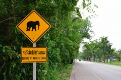 How to do Khao Yai National Park