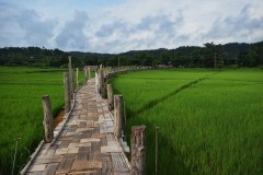 The Bamboo Bridge, Su Tong Pae