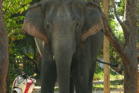 Baan Ta Klang elephant village