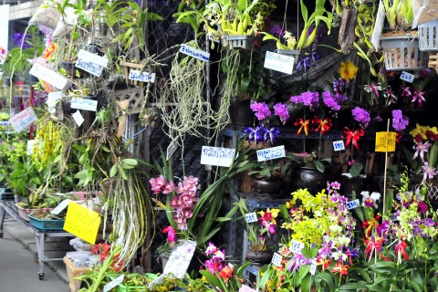 Like your guesthouse? Buy them an orchid. Photo taken in or around Kamthieng Market, Chiang Mai, Thailand by Mark Ord.
