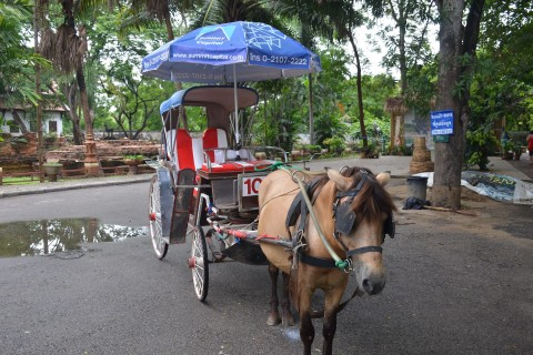 No need to bring your own pony. Photo taken in or around Wiang Khum Kham ancient city , Chiang Mai, Thailand by Mark Ord.