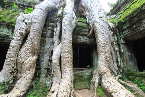 Straight from the set of Alien. Photo taken in or around Ta Prohm, Angkor, Cambodia by Caroline Major.
