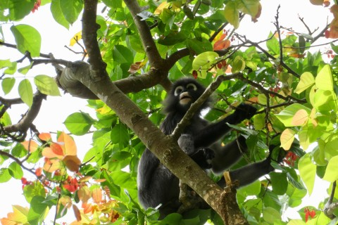 Don't forget to look up. Photo taken in or around Penang National Park, Penang, Malaysia by Sally Arnold.