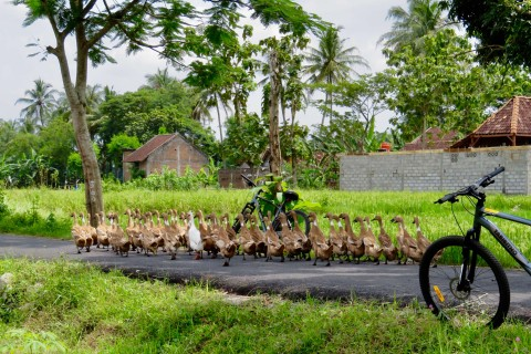 It gets crowded on the roads. Photo taken in or around Bike tours, Yogyakarta, Indonesia by Sally Arnold.