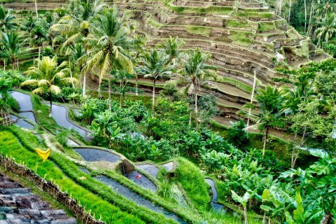 Terraces here, terraces there. Photo taken in or around Tegallalang Rice Terraces, Ubud, Indonesia by Sally Arnold.