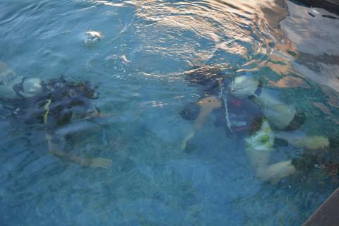 Diving on Nusa Lembongan