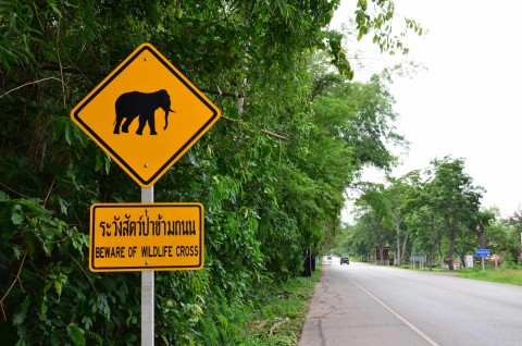 How to do Khao Yai National Park