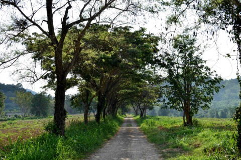 The Khao Yai farm and wine trail