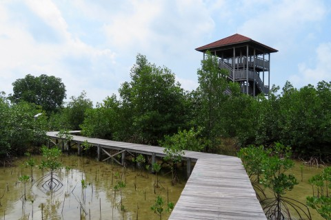 Enjoy the views. Photo taken in or around Mangrove Trekking, Karimunjawa Islands, Indonesia by Sally Arnold.