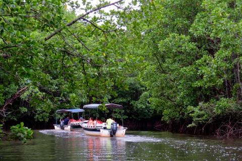 Semporna proboscis monkey river cruise