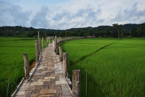 The Bamboo Bridge, Su Tong Pae