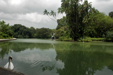Plenty of space for walks and exploration at Singapore's Botanic Gardens. Photo taken in or around Fun free things to do, Downtown Singapore, Singapore by Stuart McDonald.