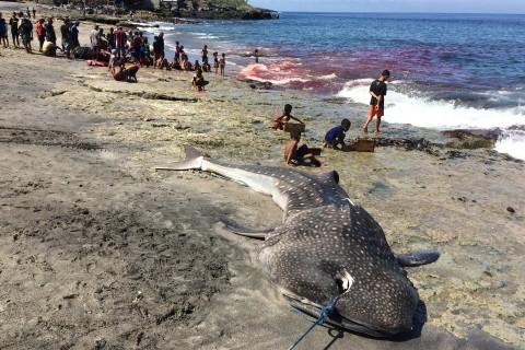 The whaling village of Lamalera